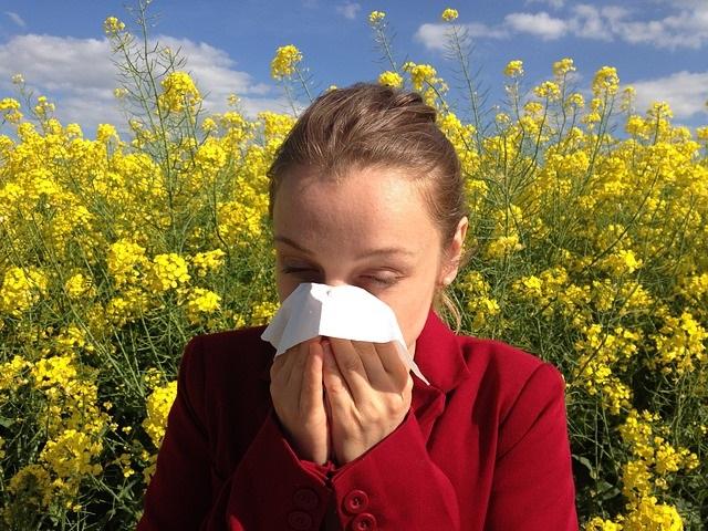 búlgaros de agua y búlgaros de leche alergia