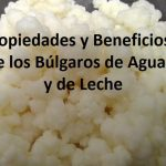 6 Beneficios de los búlgaros de agua y de los búlgaros de leche