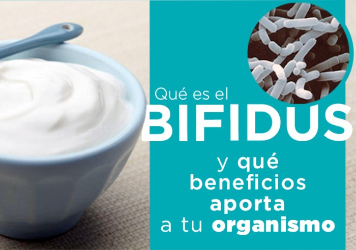 Qué es el bifidus y qué beneficios aporta a tu organismo