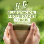 El Té y la Kombucha: Elaboración, Propiedades y Tipos.