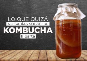 Curiosidades que no conoces sobre la kombucha