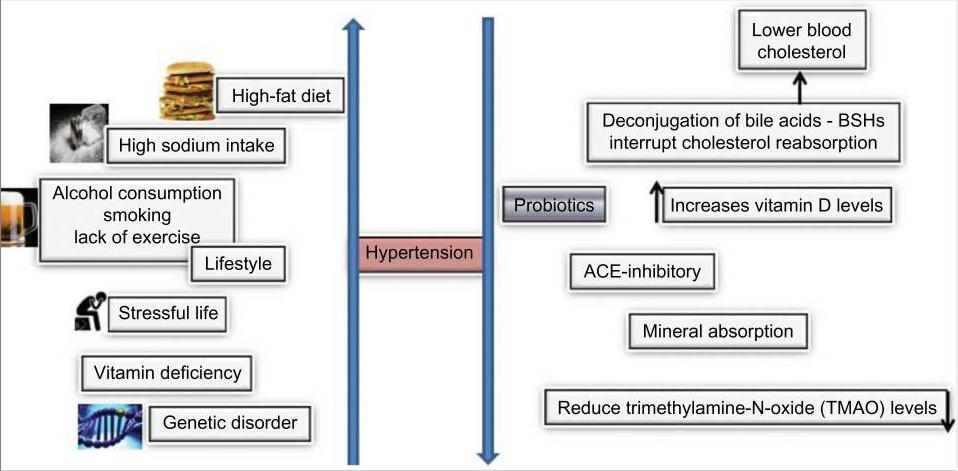 Agentes causantes de hipertensión