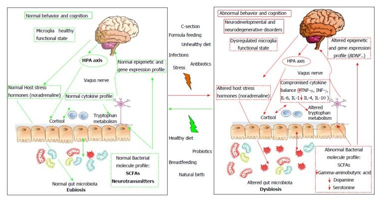 Mecanismos implicados en la relación entre la microbiota y el desarrollo y la función del cerebro.