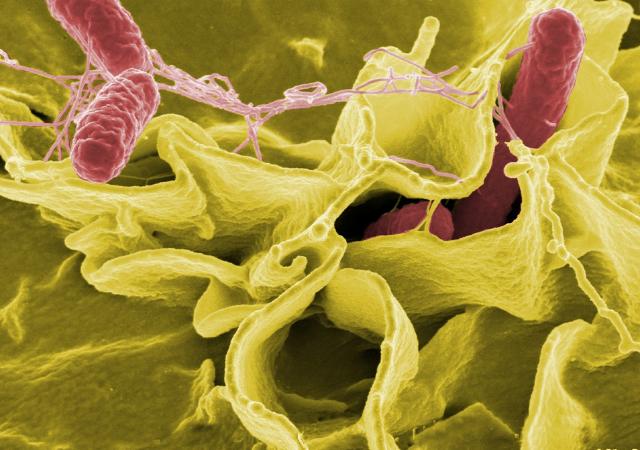 dos ejemplos de bacterias beneficiosas y su justificación