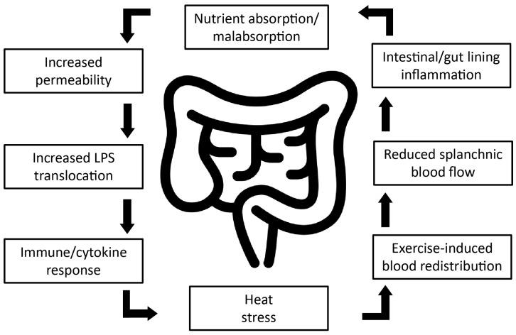 Cómo cuidar la flora intestinal en el deportista
