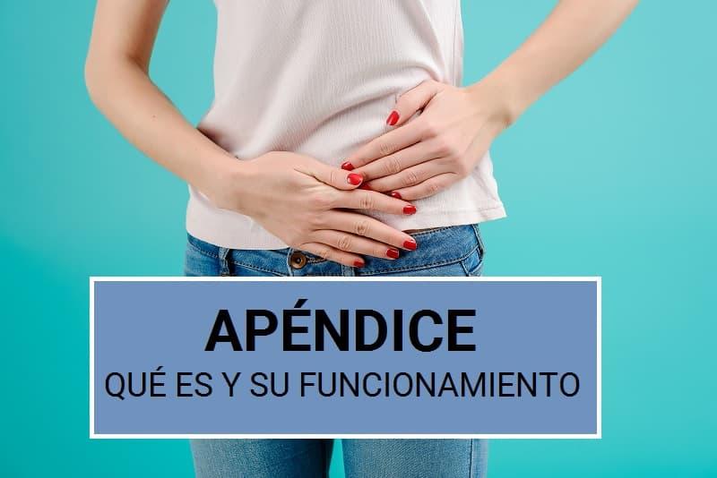Qué es la apéndice, cómo funciona y qué efecto tiene su extracción
