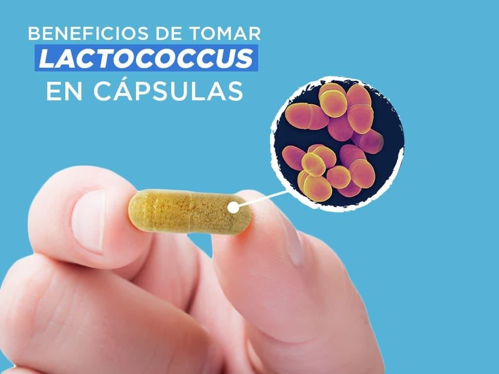 ¿Cuáles son los beneficios de tomar lactococcus en cápsulas?